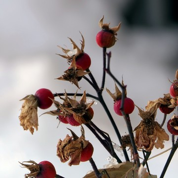 Fall Rosehips and Hive