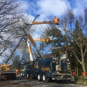 Tree Maintenance Under Blue Sky