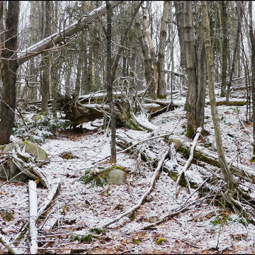 A dusting in the woods, Elliot Lake.