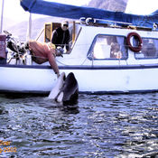 Did you ever pet a killer whale