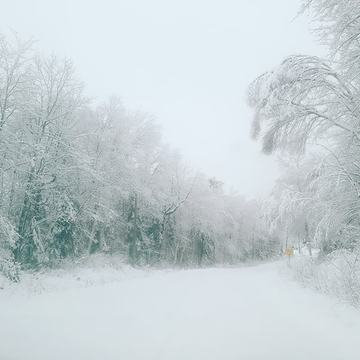 Snow Covered Trees on Dunlop Road