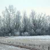 Frosty day in Stavely