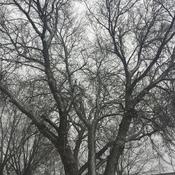 Snowy Trees On Our First Snowfall Of The Season
