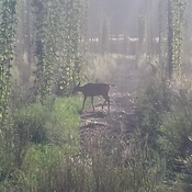 The Deer is the first one at work.