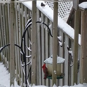 Backyard birds of winter