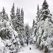Fresh snow on the trail