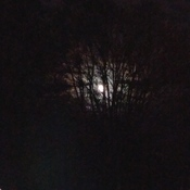 moon shining threw trees