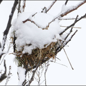 Snow covered bird's nest, Elliot Lake.