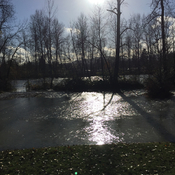 Cowichan River flooding