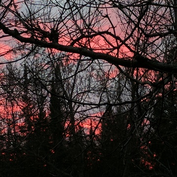 Sunset through the trees.