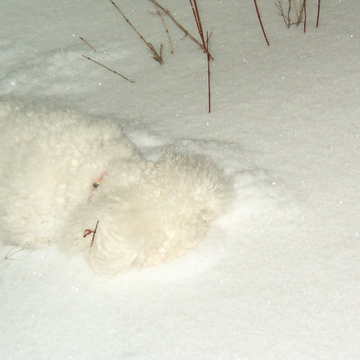 Snowball in snowdrift