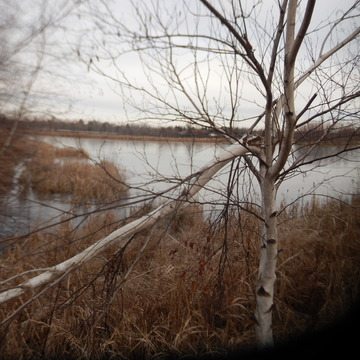 frozen Miramichi Marsh