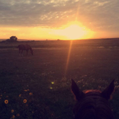 Sunset,horses and wide open places