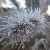 Frosty Morning Mothernatures Beauty