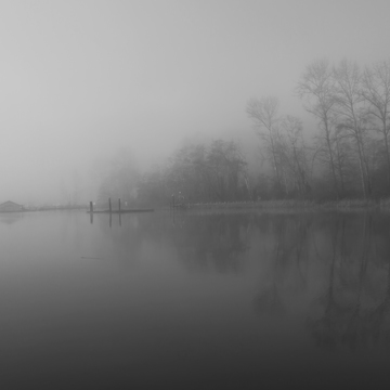 Ladner in the Fog