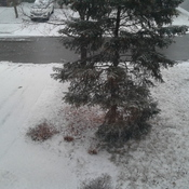 Snow At 4:30 Pm in Ontario