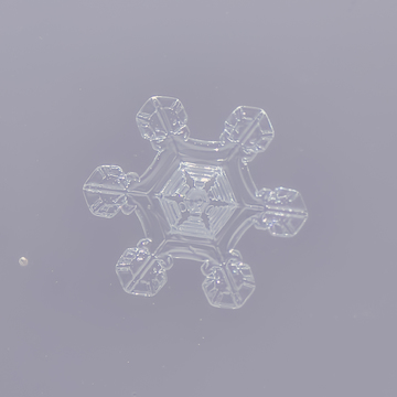 Snow Flakes on a Window