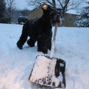 Wahkoowah helps shovel.