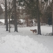 Our Dog loves winter