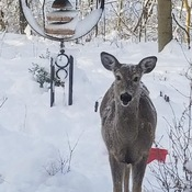 visitor in the snow