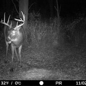 Nice Back Yard Bucks
