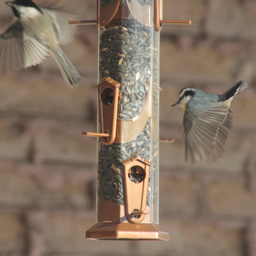 Chickadees in flight