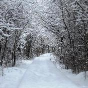 Winter Wonderland in Presqu'ile Provincial Park