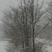 beautiful snowy day in brantford ontario