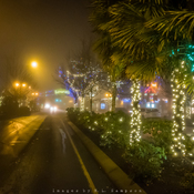 Foggy Night with Christmas Lights