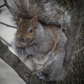 Chunky squirrels in the hood