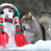 Squirrel admires his snowman!