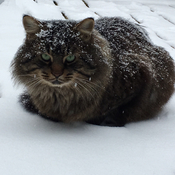 Snowy Kitty !
