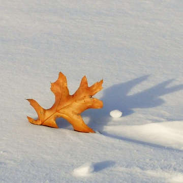 A little Fall lurks in winter