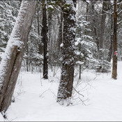 A walk in the snow, Elliot Lake.