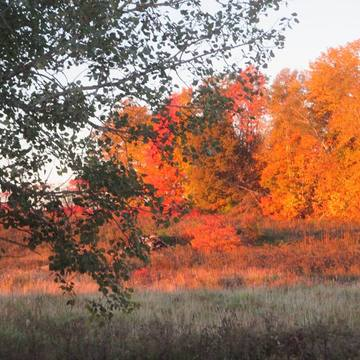 This was taken last fall in Westmeath Ontario