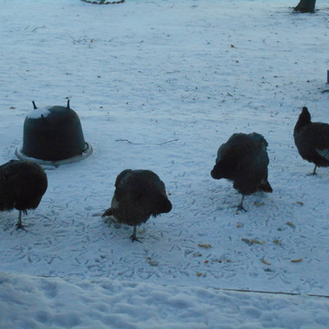 Turkey Yoga....