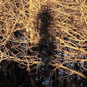 My Shadow, in the Trees. As One.