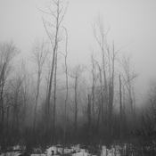 Crazy foggy day - makes for some cool pictures!