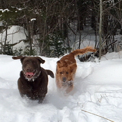 Brutus and Bishop loving the snow