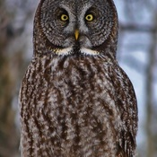 WHOOOO 's looking at you