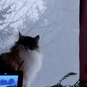 Holley watching the storm