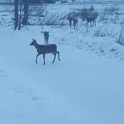 Morning visitors playing in the snow