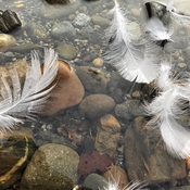 Cultas Lake. Feathers and stone