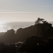 Wild Pacific Trail, Ucluelet,BC