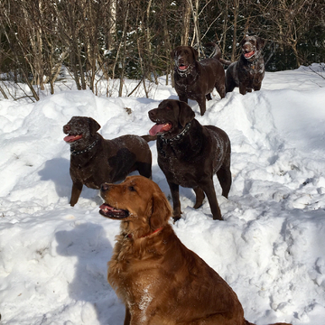 Another beautiful winter day with the dog team