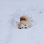 out for a roll in the snow