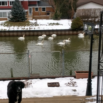 Swan's enjoying the weather.