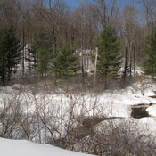 Almost Spring in Gatineau Park?