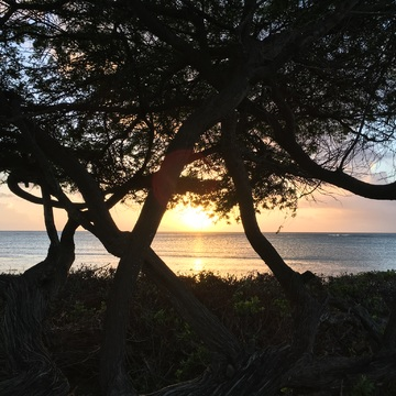 SUNSET THROUGH DIVI DIVI TREE ,ARUBA