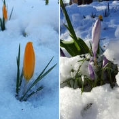 Spring vs Winter